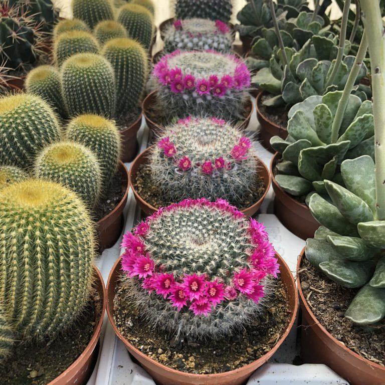 Découvrez notre sélection de cactées, succulentes et plantes d'intérieur.