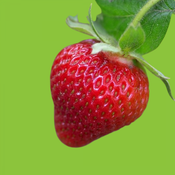 fraises anais