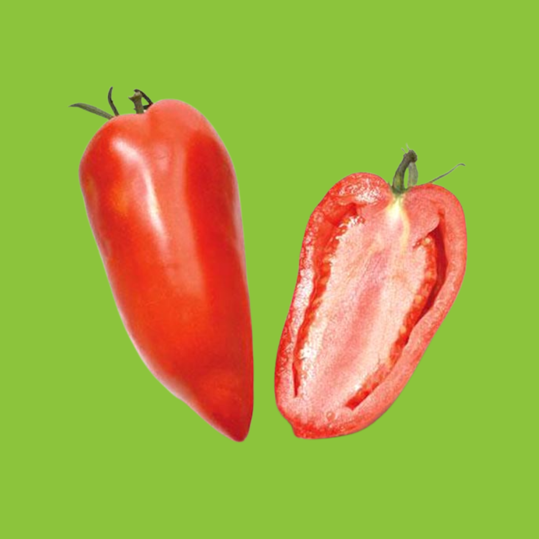 Tomate Andine Cornue ou Tomate Poivron