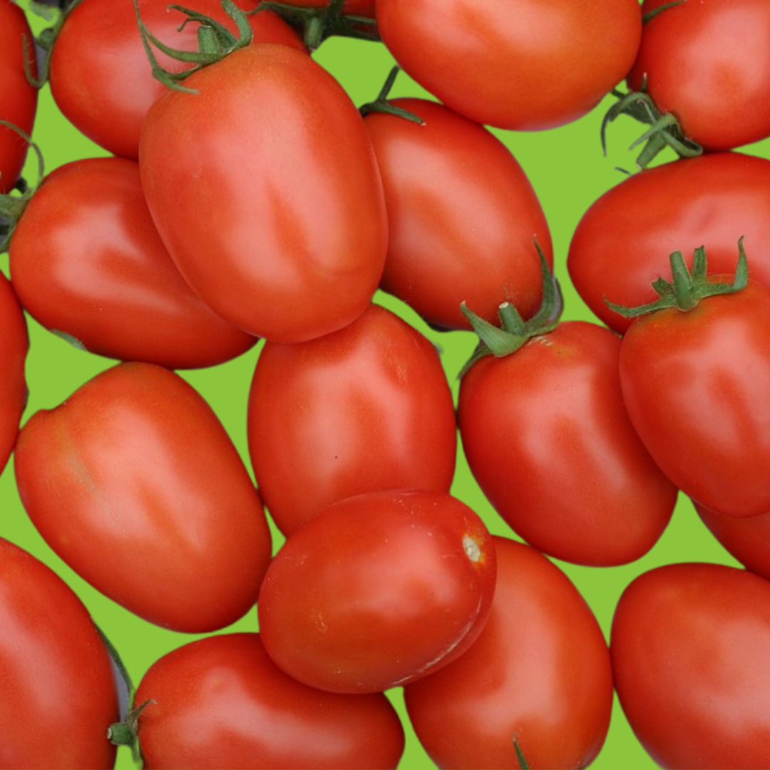 Tomate Pendelotte ou Roma